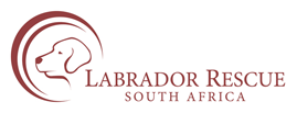 Labrador Rescue South Africa